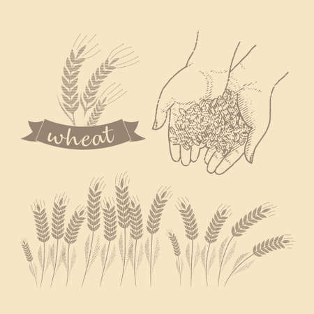 Grain in the palms