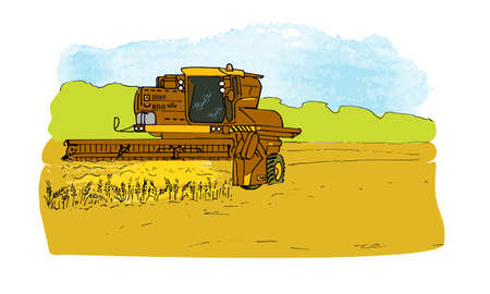 combine harvester in the wheat field