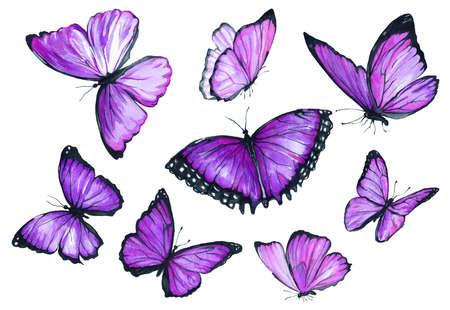 Sammlung von Aquarell Bilder von schönen Schmetterlingen . Ein Satz Illustrationen eines Insekts . Handzeichnung . Clipart isoliert