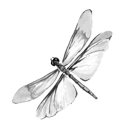 Black and white image of a butterfly on a white background. Isolated insect pattern with wings. Butterfly close-up. Handmade illustration. Animal world of insects. Wildlife cliparts.