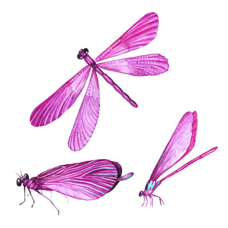 A collection of watercolor images of beautiful dragonflies. A set of illustrations of an insect. Hand drawing. Isolated Clipart. Stock Photo