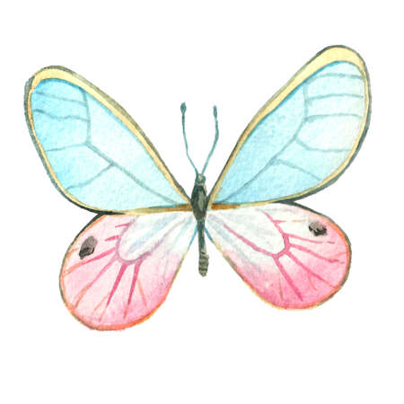 Watercolor image of a butterfly on a white background. Isolated insect pattern with wings. Butterfly close-up. Handmade illustration. Animal world of insects. Wildlife cliparts. Stock Photo