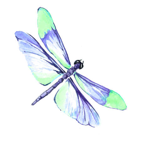 Watercolor image of a dragonfly on a white background. Isolated insect pattern with wings. Dragonfly close-up. Handmade illustration. Animal world of insects. Wildlife cliparts.