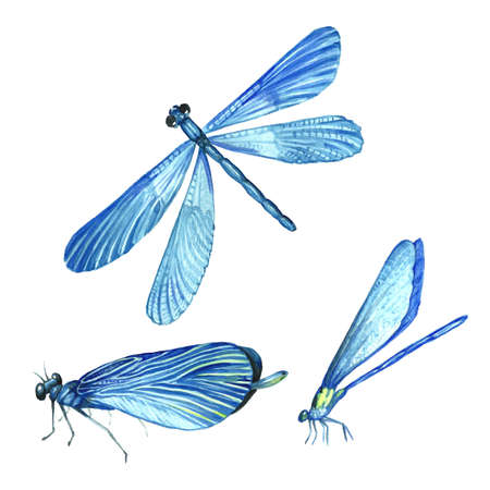 A collection of watercolor images of beautiful dragonflies. A set of illustrations of an insect. Hand drawing. Isolated Clipart. Imagens