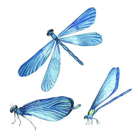 Een verzameling aquarelafbeeldingen van prachtige libellen. Een aantal illustraties van een insect. Handtekening. Geïsoleerde Clipart.