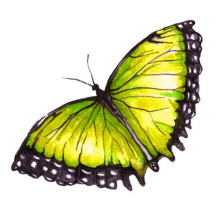 Watercolor image of a butterfly on a white background. Isolated insect pattern with wings. Butterfly close-up. Handmade illustration. Animal world of insects. Wildlife cliparts. 写真素材