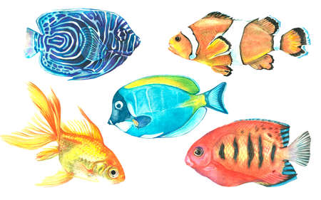 A collection of tropical fish painted with watercolor. Illustrations of marine inhabitants on a white background. A set of isolated drawings. Undersea world. Flora. A bright image of aquarium fish.