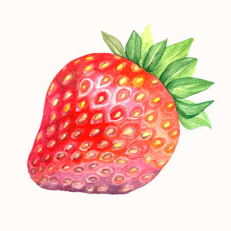 Watercolor of a strawberry. Fresh red berry. Isolated illustration on white background. Handmade drawing. Stock Photo