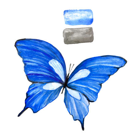 Blue butterfly in watercolor on a white background. An isolated drawing of an animal. Handmade illustration.