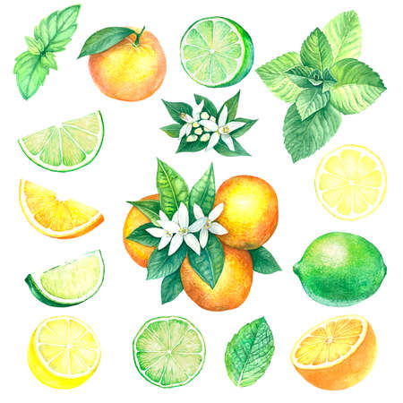 A large set of citrus fruits in watercolor. Lemon, lime, orange and mint. Illustration of isolated objects on a white background. Handmade drawing. Fruit collection.