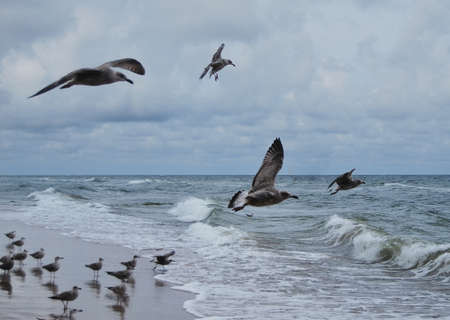 seagulls in windy day