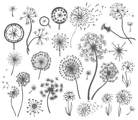 Vector Hand drawn sketch of dandelion flower illustration