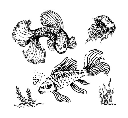 Vector Hand drawn sketch of fish illustration on white background