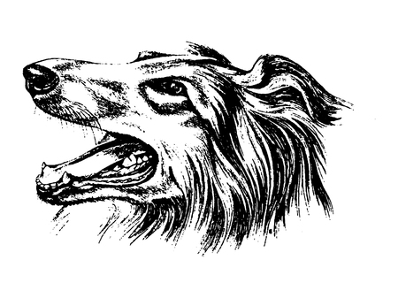 Vector hand drawn dog collie vintage illustration