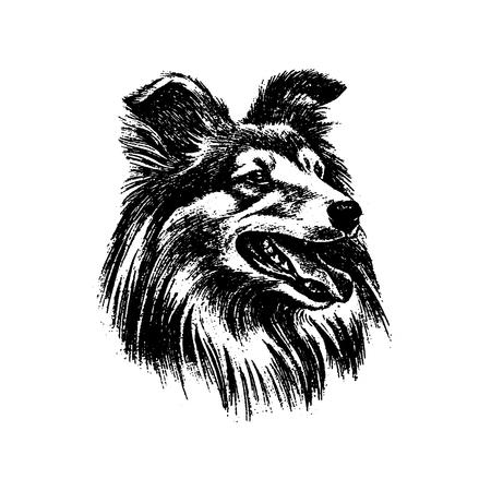 Vector hand drawn dog collie vintage illustration Illusztráció