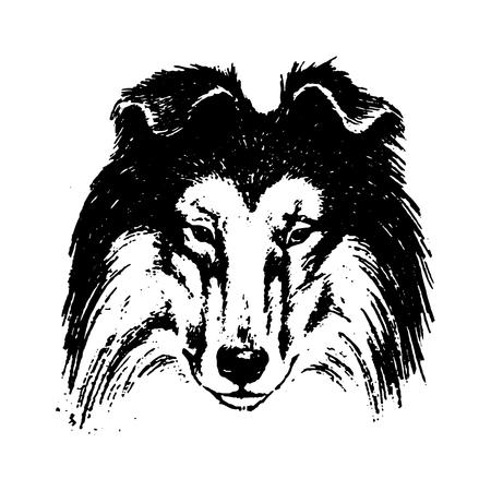 Vector hand drawn dog collie vintage illustration