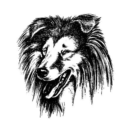Vector hand drawn dog collie vintage illustration Illustration