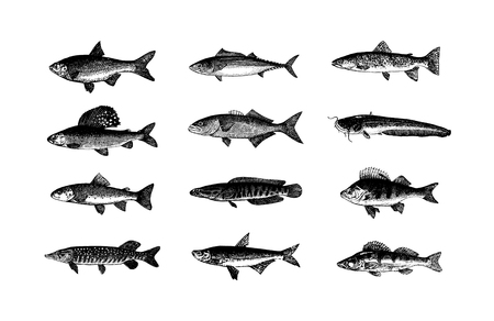 Vector hand getekende vissen schets illustratie op witte achtergrond
