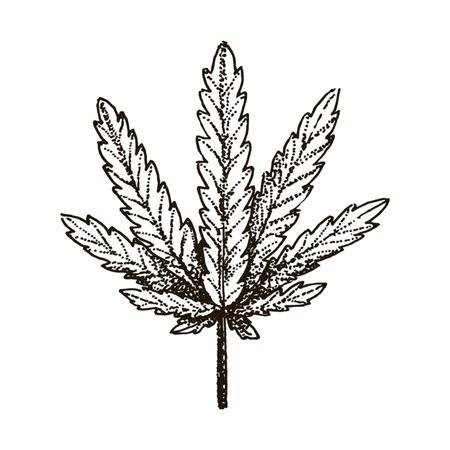 Vector hand drawn Medical marijuana leaf illustration on white background. Illustration