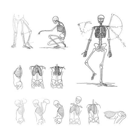 Vector illustration concept of skeleton. Stock Vector - 124671224