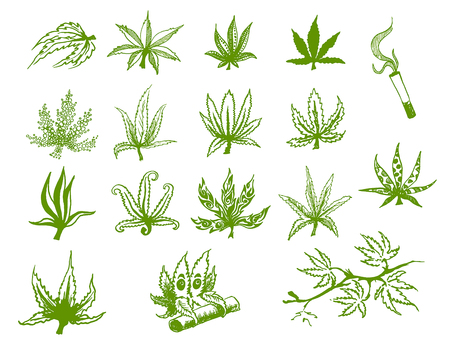 Vector hand drawn icon illustration set of green hemp cannabis leaf on white background