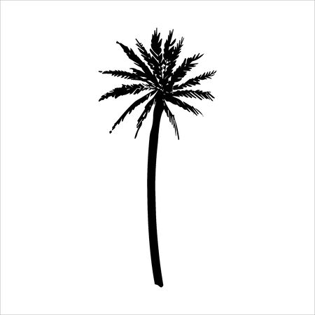 Vector hand drawn illustration of tropical palm tree