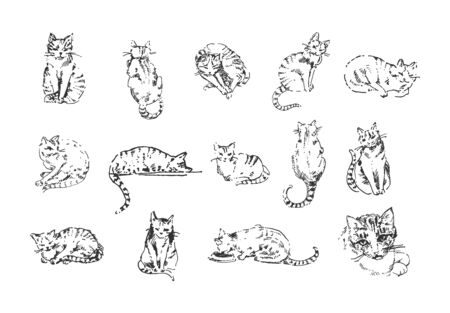 Vector illustration concept of Cat hand drown illustration on white background