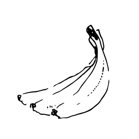 Vector hand drawn black color sketch of banana on white background Foto de archivo - 133781213