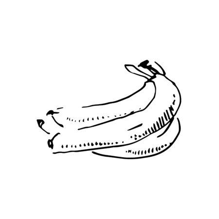 Vector hand drawn black color sketch of banana on white background Foto de archivo - 133781215