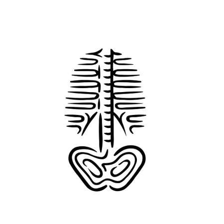 Rib cage body skeleton anatomy symbol illustration