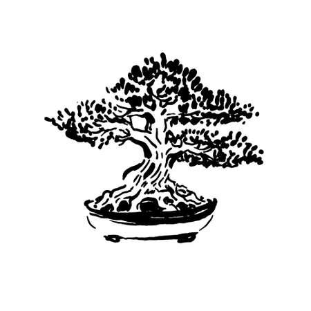 Japanese old bonsai tree in pot hand drawn