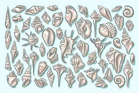 Seashell, shell, sea, mollusk, shellfish, nautical illustration
