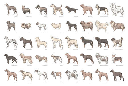 Cute dog breeds pedigree vector illustration set