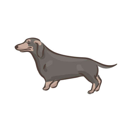 Cute dog Dachshund breed vector illustration 向量圖像