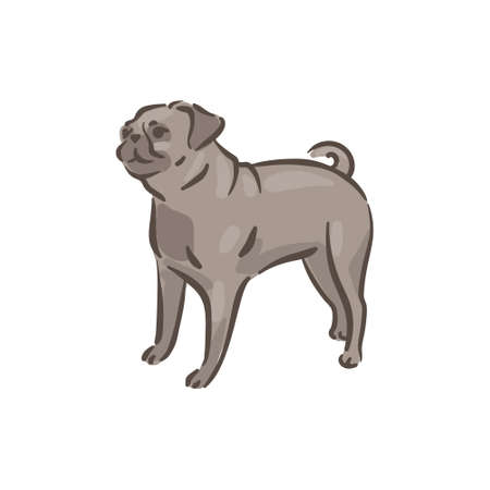 Cute dog Pug breed vector illustration