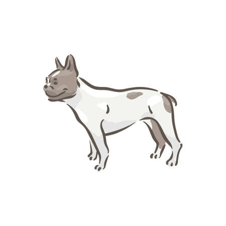 Cute dog French Bouledogue breed pedigree vector illustration
