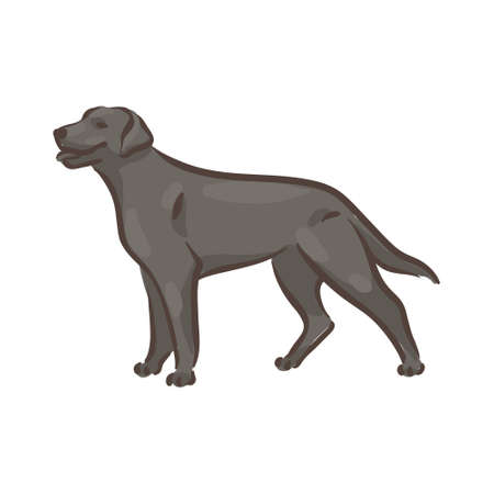 Cute dog Labrador-retriever breed pedigree vector illustration