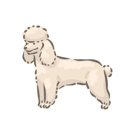 Cute dog Poodle breed pedigree vector illustration 向量圖像