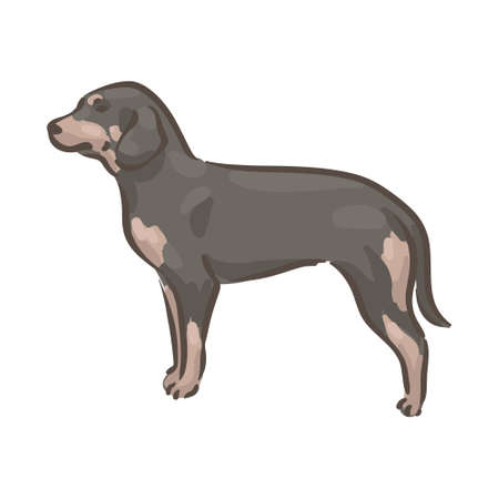 Cute dog Slovensky Kopov breed pedigree vector illustration