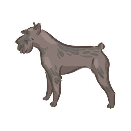 Cute dog Riesenschnauzer breed pedigree vector illustration 向量圖像