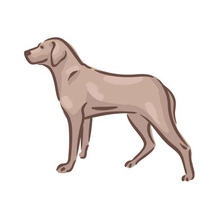 Cute dog Magyar Vizsla breed pedigree vector illustration