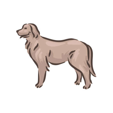 Cute dog Hovawart breed pedigree vector illustration