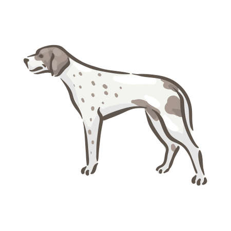 Cute dog Pointer breed pedigree vector illustration