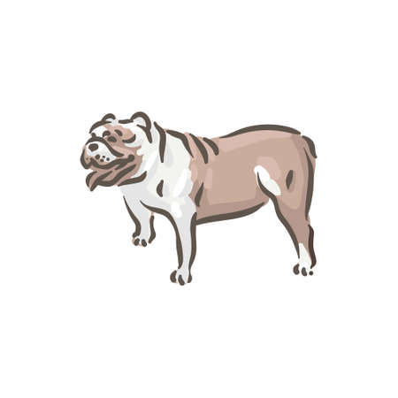 Cute dog Bull-dog breed pedigree vector illustration