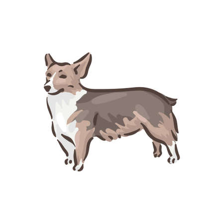 Cute dog Welsh Corgi Pembroke breed pedigree vector illustration 向量圖像