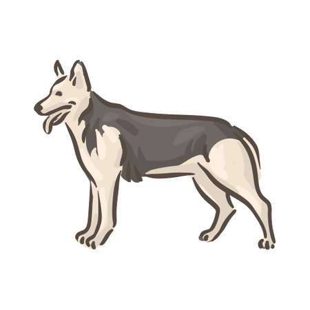 Cute dog Deutscher Schaferhund breed pedigree vector illustration 向量圖像