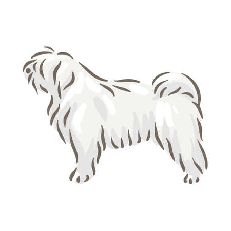 Cute dog Puli breed pedigree vector illustration