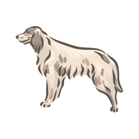 Cute dog English Setter breed pedigree vector illustration