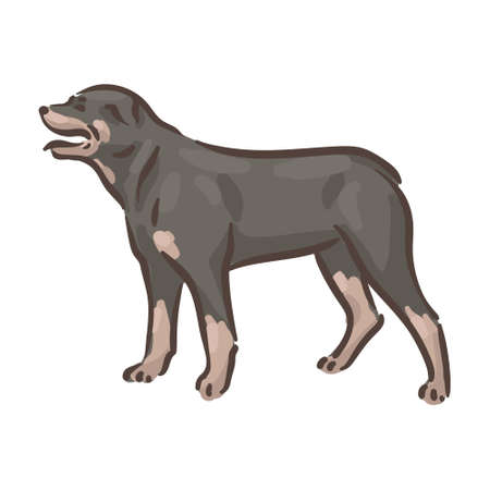Cute dog Rottweiler breed pedigree vector illustration
