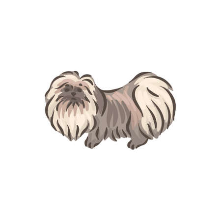 Cute dog Pekinese breed pedigree vector illustration 向量圖像